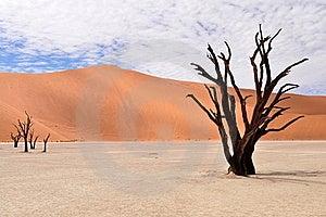 Desert Namib,Namibia,Sossusvlei Pan Royalty Free Stock Photos - Image: 20229908