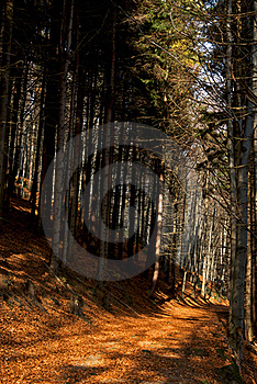 Autumn Forest Pathway Royalty Free Stock Photography - Image: 20230517