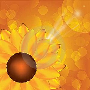 Sunflower Background Royalty Free Stock Images - Image: 20234249