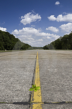 Lonely Runway With A Plant Stock Images - Image: 20239774