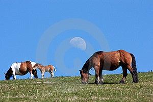 Wild Horses Stock Image - Image: 20243131