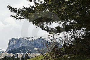 Pines And Mountain Stock Images - Image: 20246384