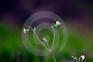 Small Flower Stock Image - Image: 20252181