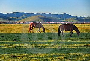 Pasture Horses,Dawn Stock Photography - Image: 20252752