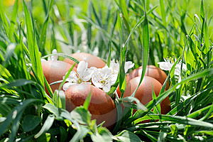 Easter Eggs In Grass Stock Image - Image: 20264461