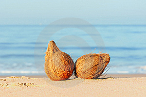 Coconuts Stock Photography - Image: 20264582