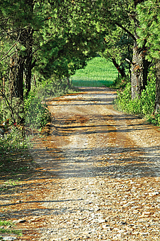 Path Through Green Forest Stock Photos - Image: 20278553
