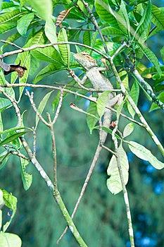 Nature Camouflage Royalty Free Stock Photo - Image: 20284575