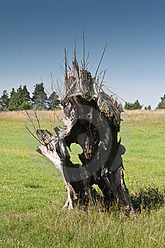 Old Burnt Tree On Grassland Royalty Free Stock Photo - Image: 20291345