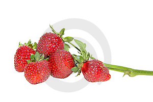 Sprig Of Strawberries On A White Background Royalty Free Stock Photo - Image: 20293975