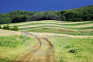 Field And Blue Sky Royalty Free Stock Image - Image: 20295796