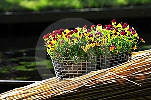 Bouquet Of Flowers Royalty Free Stock Photography - Image: 20299507