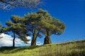 Tree's Stock Image