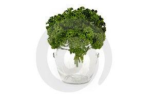 Parsley Glass Royalty Free Stock Image - Image: 20300866