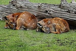 Couple Of Marshbucks Stock Image - Image: 20311831
