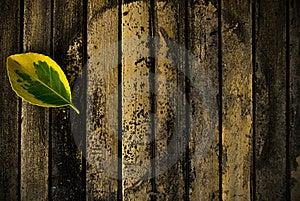 Leaf On Wood Stock Image - Image: 20316331