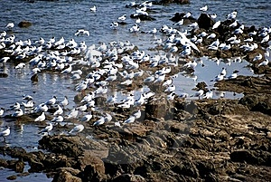 Seagull Gathering Royalty Free Stock Photography - Image: 20316657