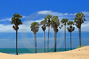 Palm Trees Royalty Free Stock Photo - Image: 20322995