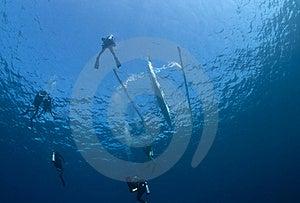 Divers Descending Stock Image - Image: 20323331
