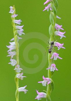 On Floret's Ant Stock Photos - Image: 20323903