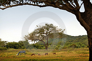 Calauit Reserve Royalty Free Stock Photography - Image: 20328467