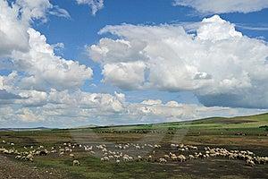 Flock Of Sheep Stock Image - Image: 20335511