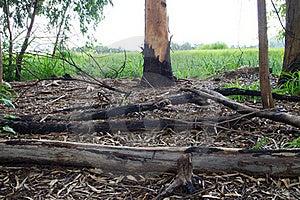 Burned Trees Stock Image - Image: 20347691