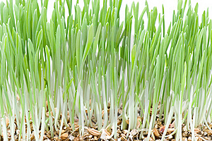 Green Grass On White Royalty Free Stock Photography - Image: 20349027