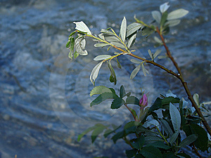 Flower On Riverbed Royalty Free Stock Photos - Image: 20353458