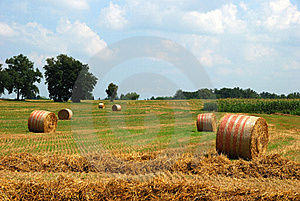 Rolls of hay Royalty Free Stock Image