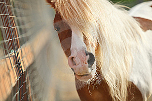Brown Pony Face Stock Image - Image: 20362941