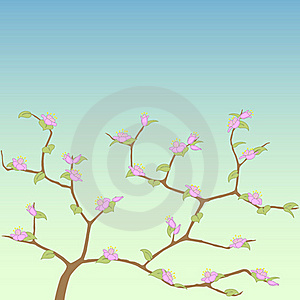 Spring Tree. Stock Image - Image: 20364861