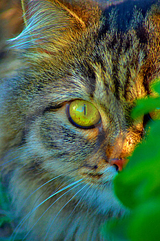 Close-up Of A Cat In The Grass Stock Photo - Image: 20374310