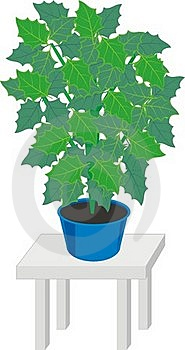 Home Plants In Pot Stock Photos - Image: 20374553
