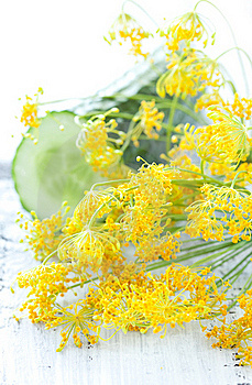 Fresh Dill Stock Image - Image: 20375701