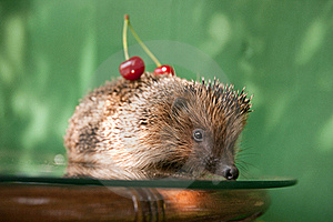 Cute Hedgehog Royalty Free Stock Photos - Image: 20381198