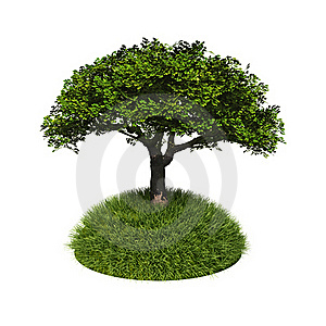 Green Tree With Grass Royalty Free Stock Image - Image: 20382236