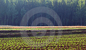 Fields And Woods Stock Photo - Image: 20390110