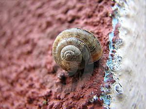 Snail On The Wall Royalty Free Stock Image - Image: 2042456