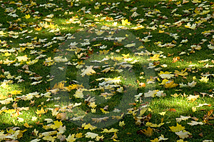Sun Shade And Leaves Royalty Free Stock Image - Image: 2043626