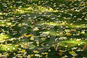 太阳树荫和叶子 免版税库存图片 - 图片: 2043626
