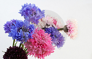 Bouquet Stock Photography - Image: 2049022