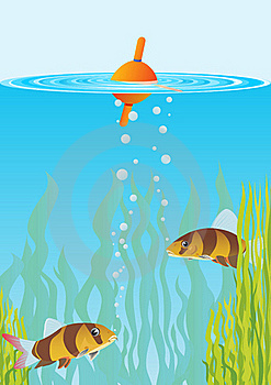 Fish And Float Stock Images - Image: 20406104