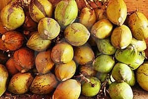 Kokosnötfruktaffär Royaltyfria Bilder - Bild: 20416059