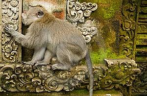 Monkey Forest Stock Images - Image: 20426364