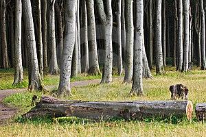 Bosque Costero Imágenes de archivo libres de regalías - Imagen: 20433199