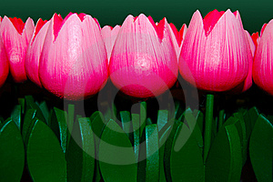 Wooden Tulips Pink Stock Images - Image: 20441584