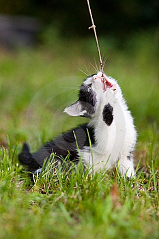 A Cat With A Stick Stock Photo - Image: 20444210