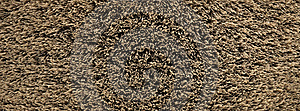 Horsehair Bristle Background Stock Images - Image: 20459954