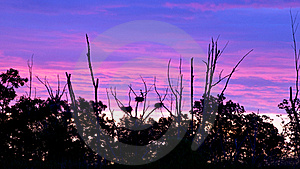 Rookery Heron Nests Set Against Early Morning Sky Stock Photography - Image: 20460042